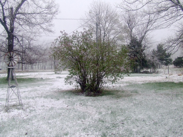 The snow is on the lilacs. We hope the lilacs won't freeze.